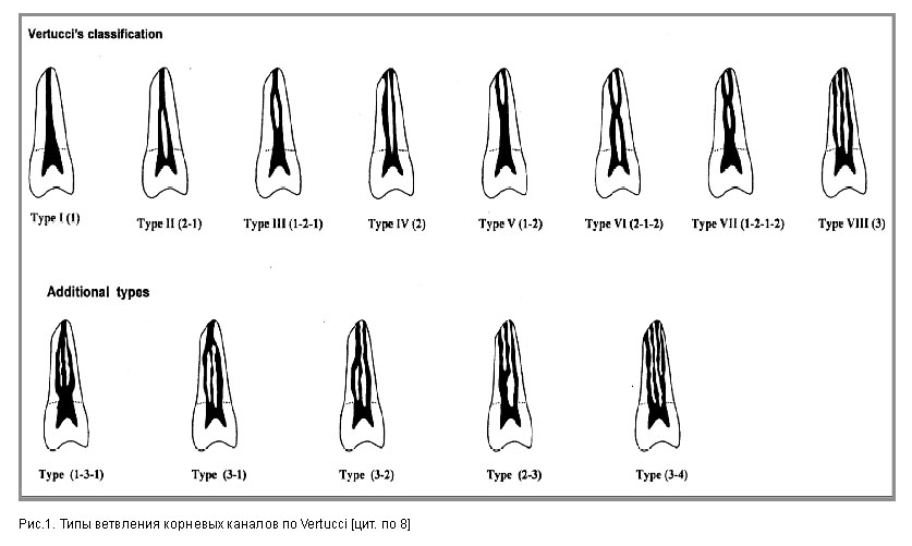 зуба и объединяются вблизи
