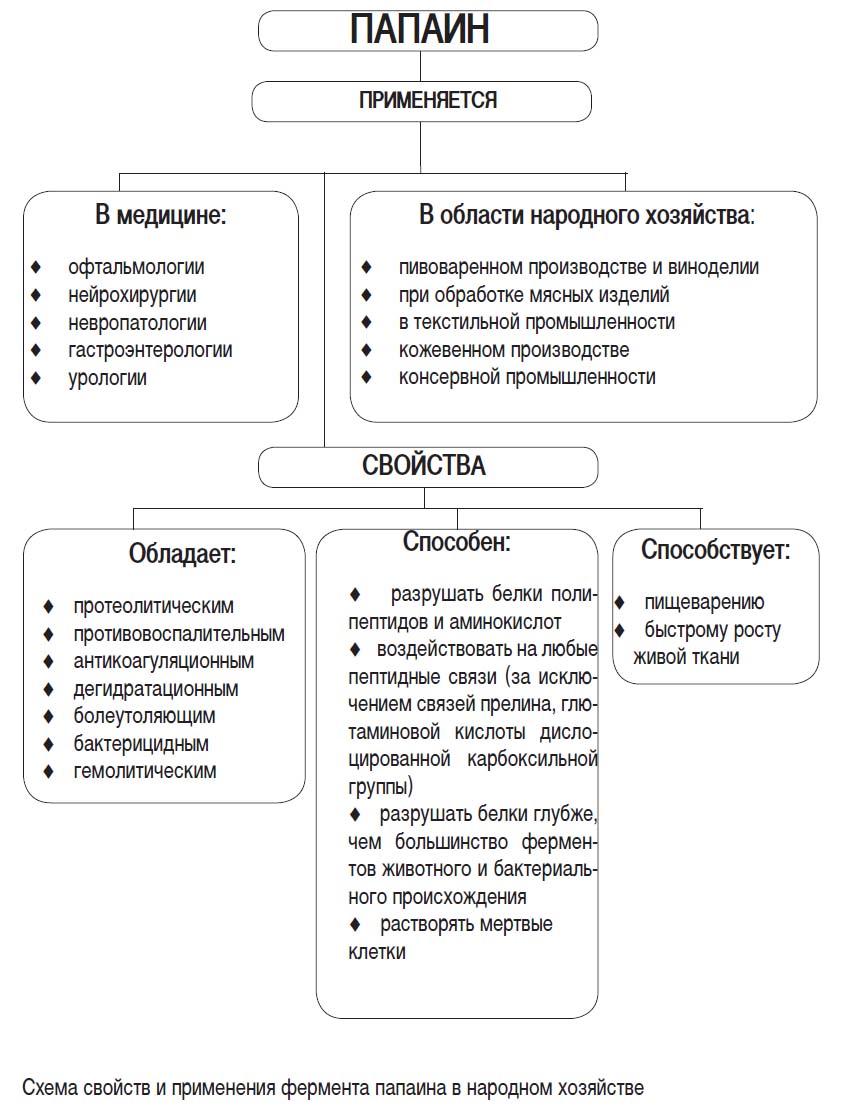 Эндопептидаза