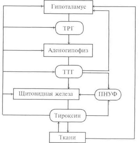 гормонов щитовидной железы