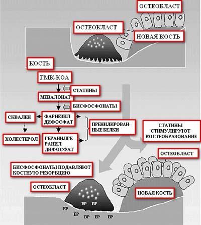 влияние статинов на печень